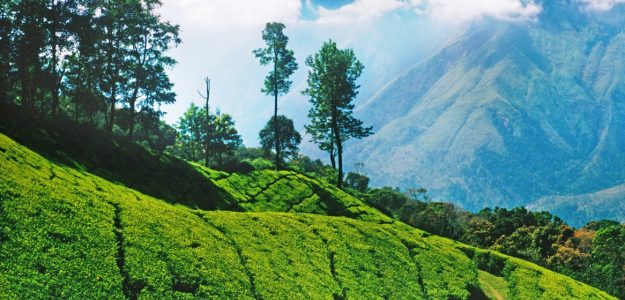 HIGHFIELDS SHOPPING-Ooty Products-essential 0ils-tea Products-Frazertown-Bangalore
